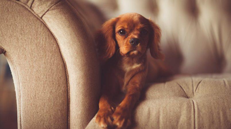 frases célebres sobre perros