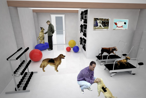 Un hotel de lujo para perros for Centro fitness