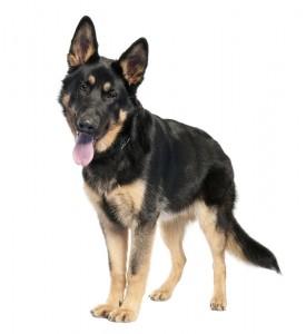 psicología canina