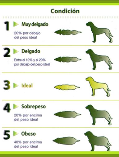 El peso ideal de un perro for Cuanto peso aguanta un cuelga facil