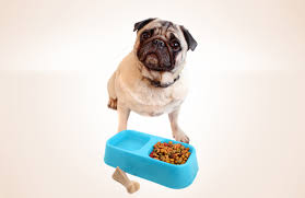 mi perro no quiere comer