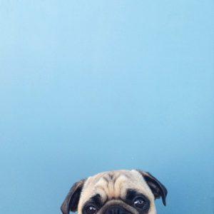 perro fotogenico