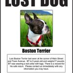 qué hacer cuando se pierde un perro