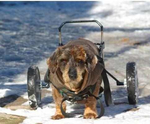 Sillas de ruedas para perros discapacitados for Sillas para perros