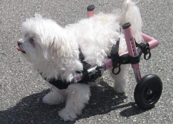 Sillas de ruedas para perros discapacitados for Sillas para discapacitados