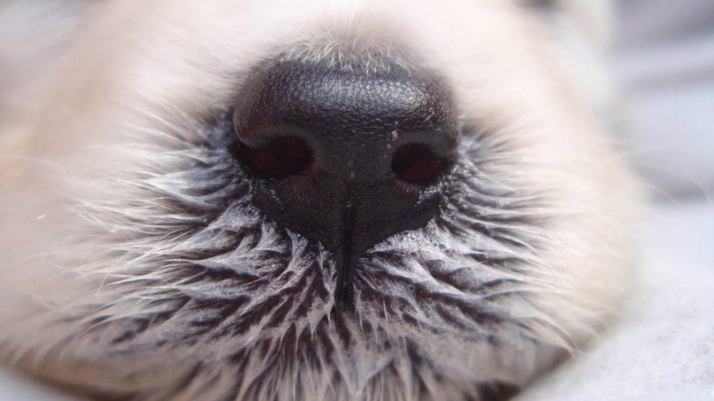 olfato del perro