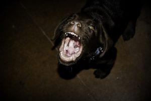 agresividad del perro con la familia