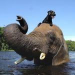 perro y elefante
