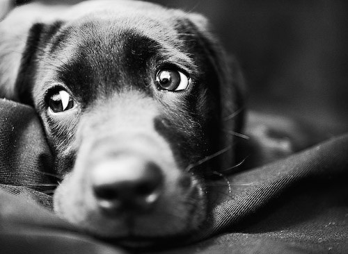 educar perro maltratado