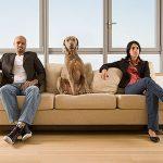 perro y divorcio