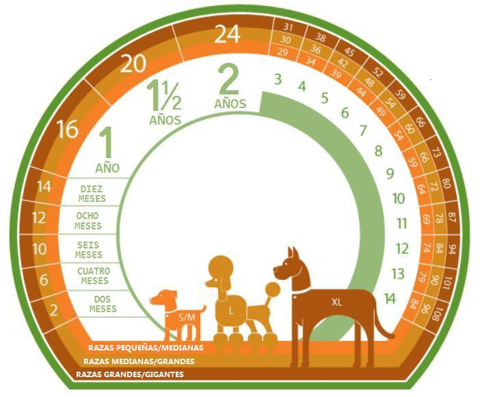calcular edad humana del perro