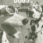 libro fotografia canina