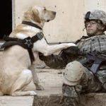 perros con oficio