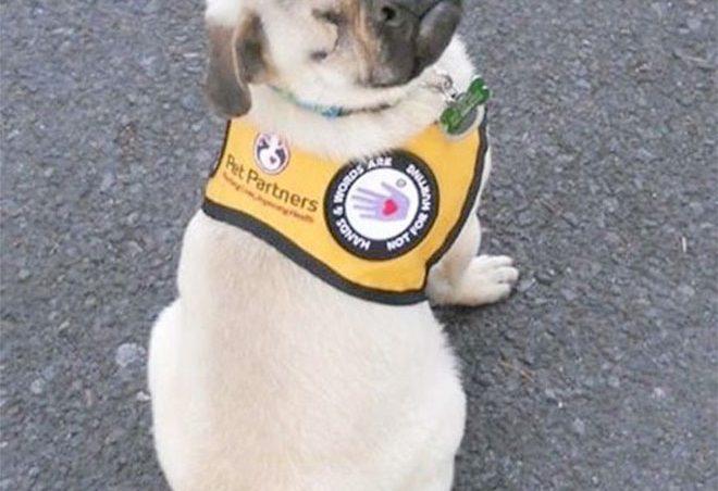 Xander, el perro terapeuta