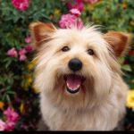 mantén en forma el cerebro de tu perro