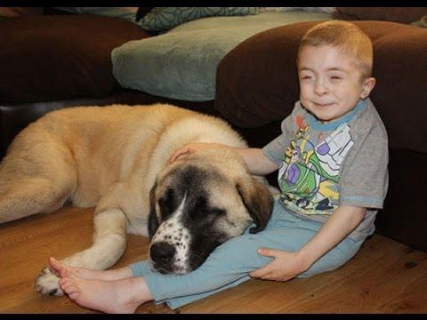 historia real perro y niño
