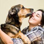 no humanices el perro