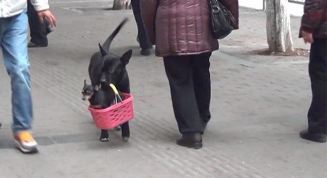 perro cuida cachorro