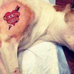 perra tatuada