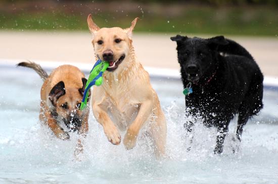 parque acuático para perros
