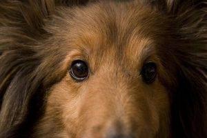 perro y emociones