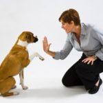 Curso de educación canina