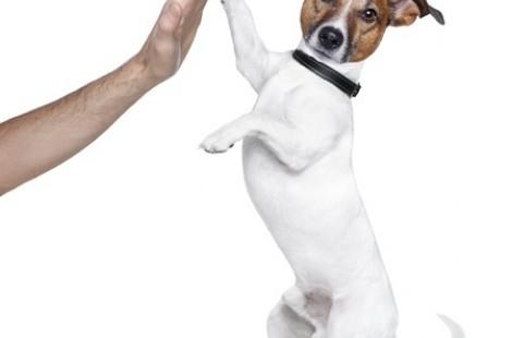 curso educación canina