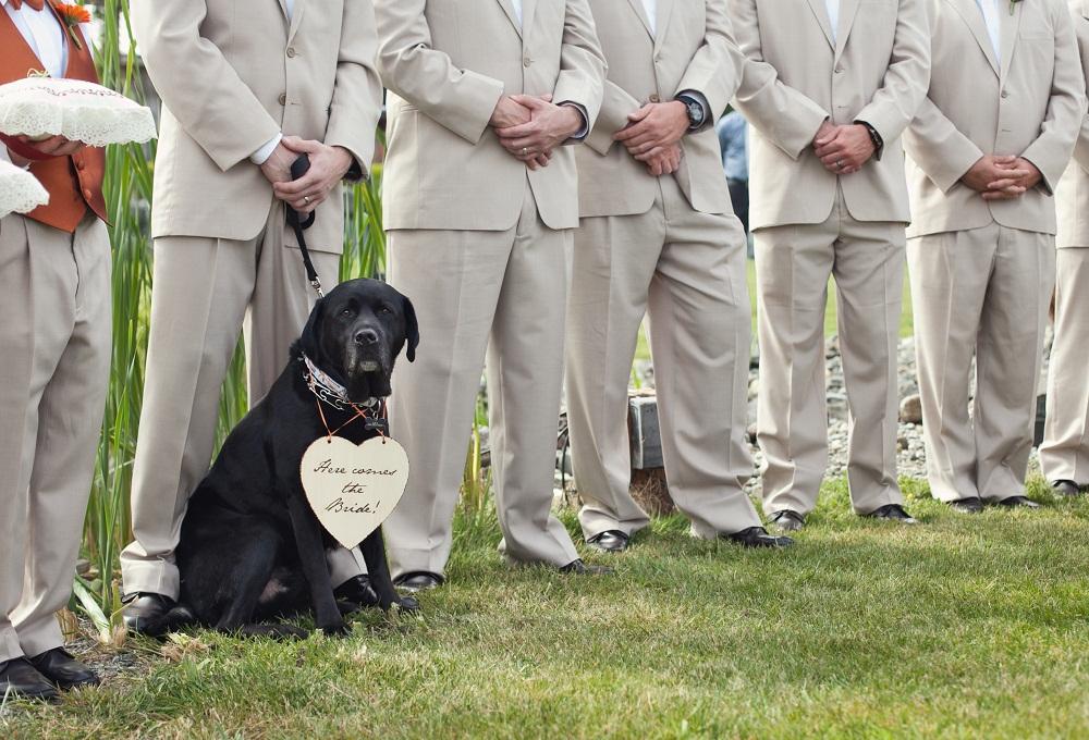 perros en una boda