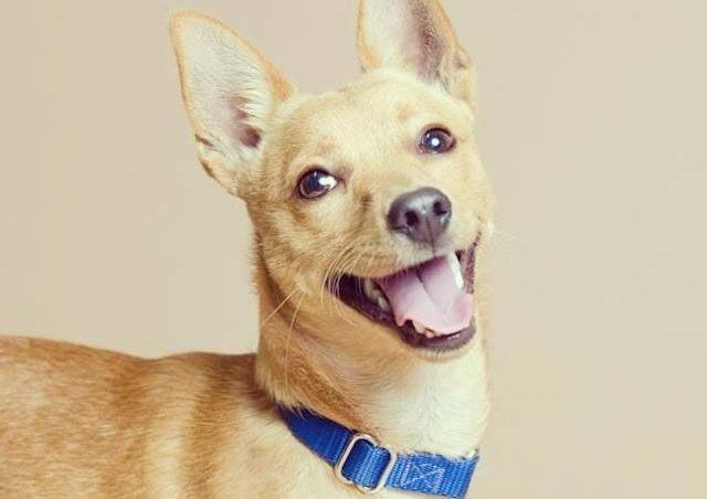 seguro para perro