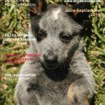 revista para perros Divine Chien