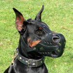 cuándo utilizar bozal para perro