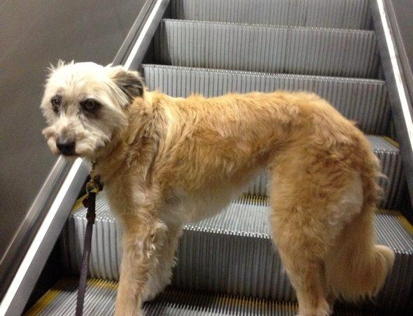 El peligro de las escaleras mec nicas para los perros el - Escaleras para perros ...