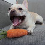 perros vegetarianos