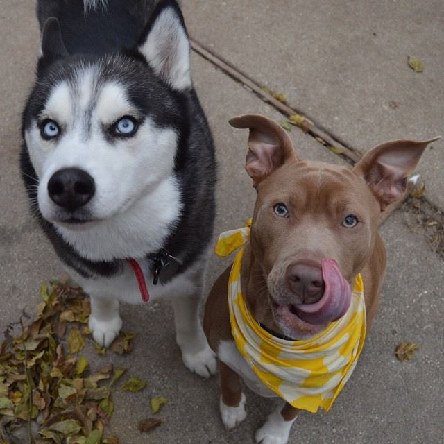 perros y bares