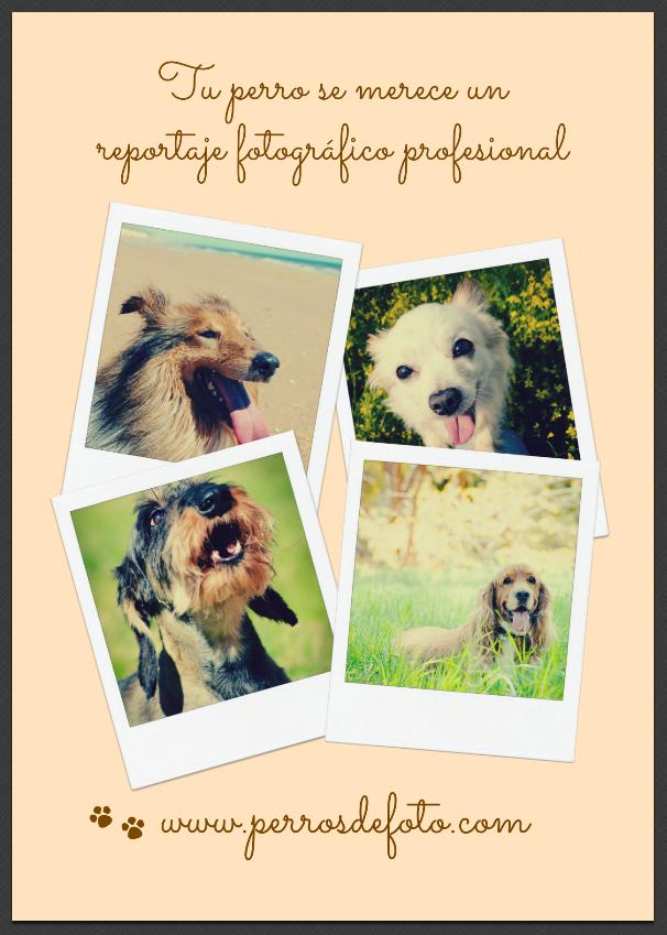 perros de foto