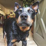 enfermedades perros ancianos