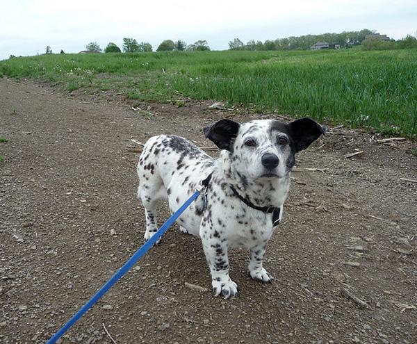cruces de perros maravillosos