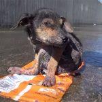 rescate de un cachorro