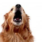 por que ladran los perros