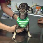 elegir el veterinario ideal