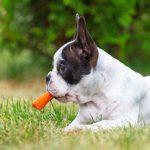 vegetales para perros