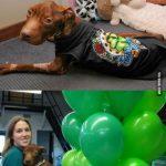 perro milagro