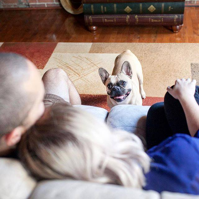 muerte de un perro es igual que muerte de un familiar