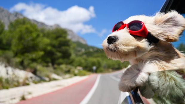 por qué los perros adoran sacar la cabeza por la ventanilla del coche