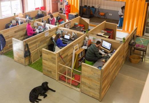 La oficina más Pet-Friendly del mundo