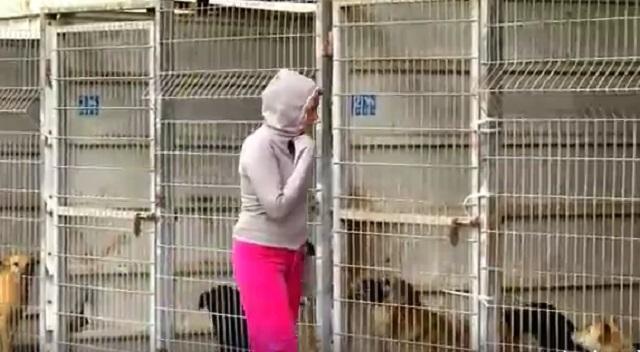 refugio animal