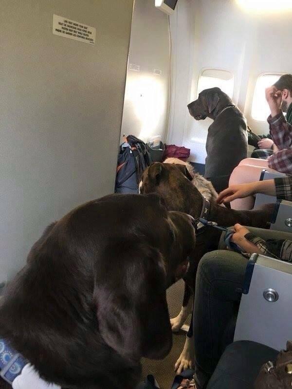 perros salvados de incendio
