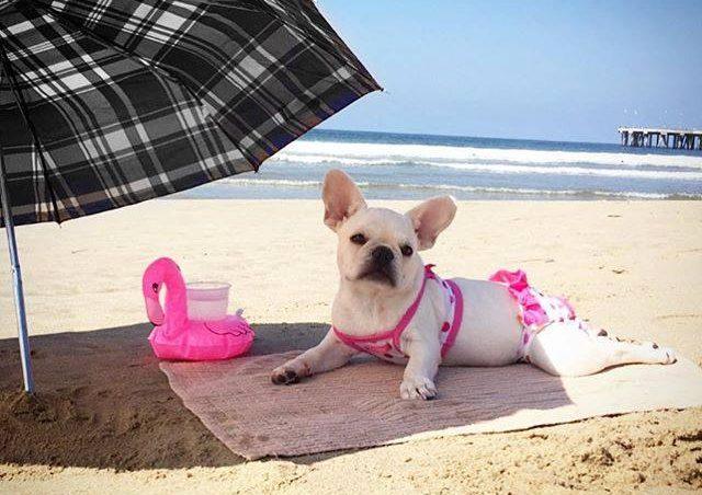 razones por las que el perro toma el sol