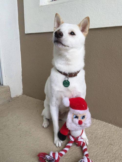 reaccion de un perro