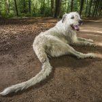 perro con la cola más larga del mundo